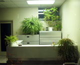 Green office with plants
