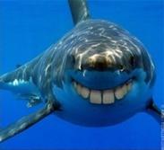 shark-teeth-3