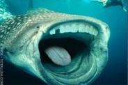 shark-teeth-5